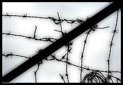 EDITORIAL: La Audiencia Nacional cumple la sentencia europea y excarcela a la etarra asesina