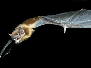 Miércoles 15 de enero en el Museo Medio Ambiental Conferencia sobre las especies de murciélagos en Pamplona