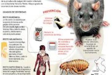 Estado Islámico planea usar armas biológicas de destrucción masiva, como la peste negra, contra Occidente