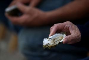 © Proporcionado por AFP Ostras recientemente pescadas el 31 de julio de 2014 en Inverness, California