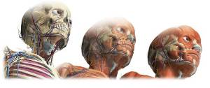 Anatomía de la cabeza humana.