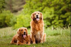 Terapia asistida con animales para menores sometidos a violencia de género