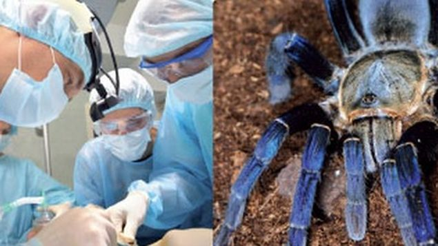 La mayor base de toxinas de animales servirá para desarrollar nuevos fármacos