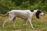 Navarra pone en marcha un curso de formación en sanidad animal para cazadores