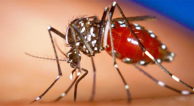 Virus Zika: Doce preguntas y respuestas