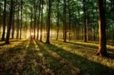 Un investigador de la UPNA colabora en un informe sobre bosques y agua de la ONU