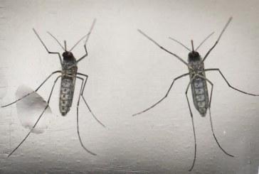 Detectan en Sevilla y Huelva un mosquito que podría transmitir enfermedades
