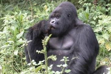 Los animales con cerebro grande, curiosos y que pueden manipular, innovan