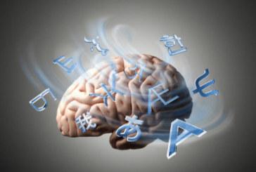 ¿Facilidad para los idiomas? Se lo debes a tus genes y a las medidas de tu cerebro