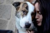 Los perros entienden las palabras y la entonación de las personas