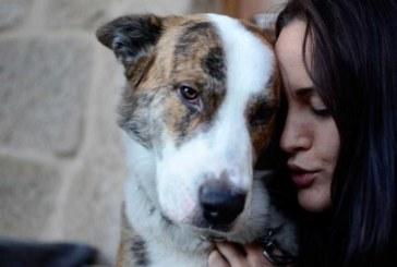 Si tu perro te pone ojitos…algo te quiere decir