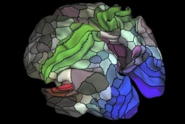 El cerebro tarda 200 milisegundos en procesar la información,según un estudio