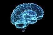 El cerebro funciona como una sinfónica para dar orden a los recuerdos