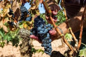 La previsión de lluvias retrasa el inicio de la vendimia en la DOCa Rioja