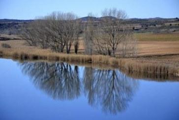Restos de antibióticos y otros fármacos impactan en la vida acuática de los ríos