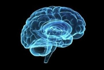 Estudian cómo cambia el mapa morfológico de un cerebro bilingüe y uno monolingüe