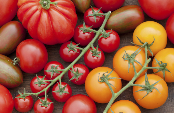 Pamplona y Sarriguren acogerán la Feria Tomate Antiguo de 8 al 10 de septiembre