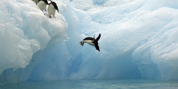 Artistas internacionales llevan sus obras hasta la Antártida