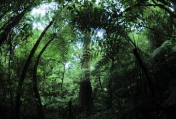 A menor biodiversidad en los bosques, menos producción de madera