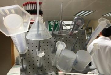 Hallan una molécula que mejora el aprendizaje en un modelo animal de autismo severo