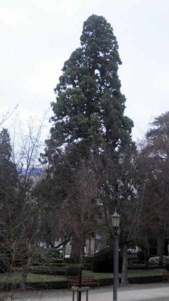 Como medir la salud de los árboles