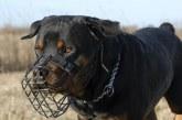 Las policías locales de Navarra podrán dar licencia a propietarios de animales peligrosos
