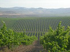 El sector vitivinícola navarro creció un 7 % interanual en 2016