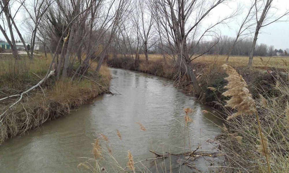 Los fármacos que llegan a los ríos alteran forma de nadar y comer de los organismos