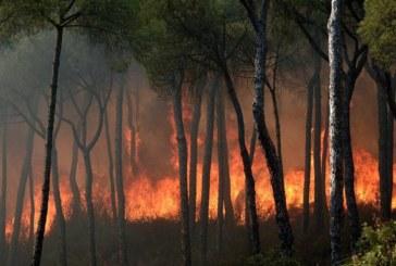 Catorce medios aéreos se incorporan a la extinción del incendio de Moguer