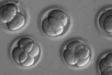 Logran corregir en embriones la mutación genética que causa la muerte súbita