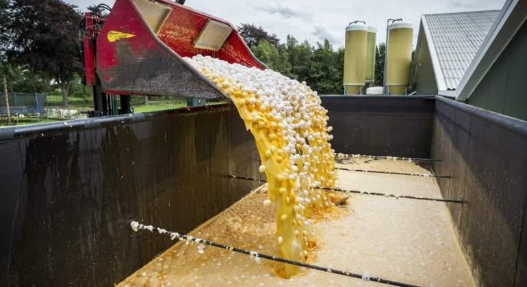 Salud Pública no encuentra restos del insecticida fipronil en huevos y ovoproductos producidos en Navarra