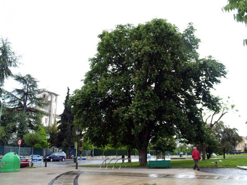 """El Ayuntamiento de Pamplona pone en marcha """"El árbol del barrio"""""""