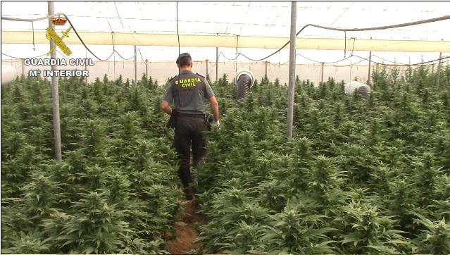 La Guardia Civil detiene a 9 personas por cultivar y elaborar marihuana