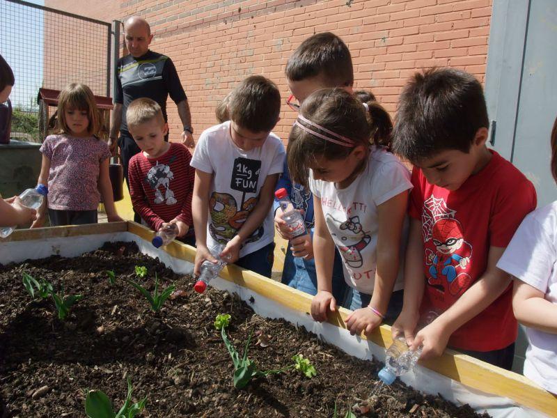 El Ayuntamiento de Pamplona impulsa este curso un programa piloto de huertas ecológicas en los centros escolares de Rochapea y Sanduzelai.