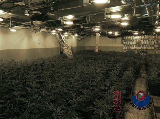 Desmantelan red de cultivo marihuana en Álava y Navarra para venta en R.Unido