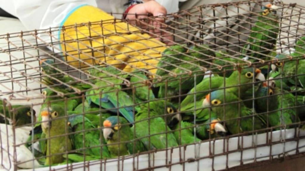Espa a ya tiene su primera estrategia contra el trafico for Pececillo nuevo de cualquier especie