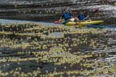 20.000 Patos de goma geolocalizados competirán en el río Arga
