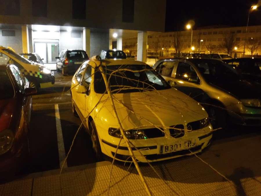 Cortan un árbol y lo arrojan contra vehículos estacionados en Pamplona