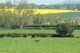 Las mujeres lideran la innovación científica en la agricultura del Reino Unido, según AHDB