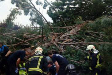 Continúan ingresados dos heridos por caída de árbol, uno de ellos muy grave