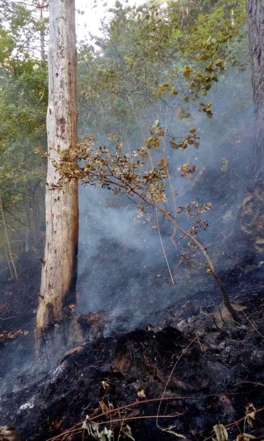 Efectivos de bomberos movilizados por un incendio en la sierra de Illon