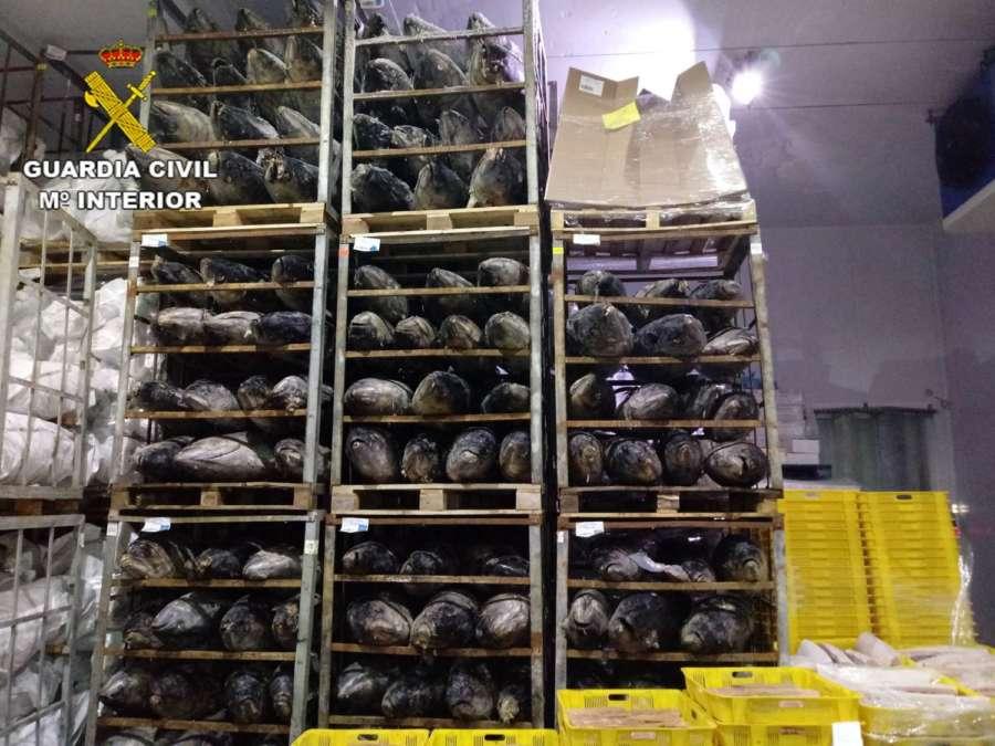 La Guardia Civil incauta 45 toneladas de atún congelado en cuatro provincias