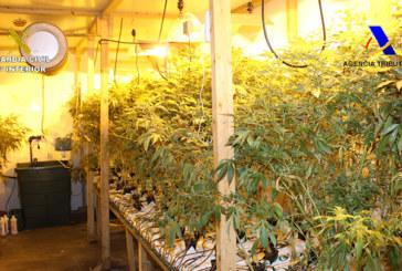 La Guardia Civil y la Agencia Tributaria intervienen casi 3.000 plantas de marihuana en una nave industrial de Álava