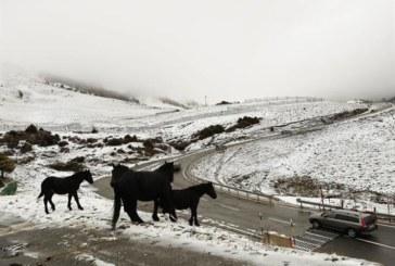 Alerta amarilla por nieve y viento en Navarra