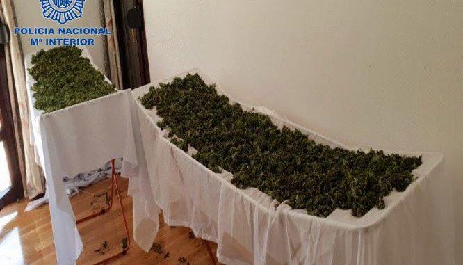 Detenido en Tierra Estella con más de 53 kilos de marihuana en su casa