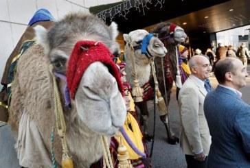 Unas 1.200 personas participarán en la Cabalgata de Reyes de Pamplona