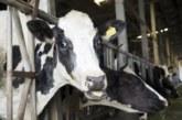 Detectado un caso del mal de las vacas locas tras 15 meses sin EEB en España