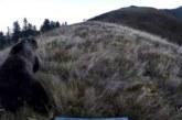Ganaderos se manifiestan contra la presencia del oso y del lobo en el Pirineo