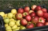 La primera manzana del mundo nació en Kazajistán