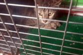 Aprobado derribo del convento Javerianos tras recoger los gatos del interior
